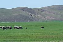 高清内蒙古旅游