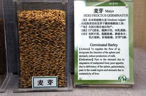 麦芽和药性说明