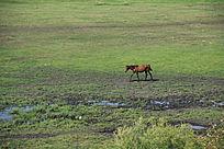 内蒙古景观
