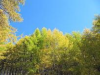 内蒙古树林