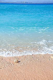 沙滩上的贝壳