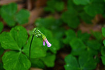好看的小野花