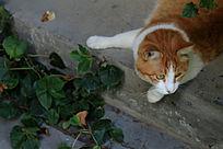 慵懒的加菲猫