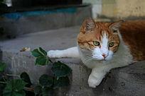 慵懒悠闲的加菲猫