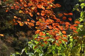 森林秋天紅葉