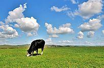 最美草原美景