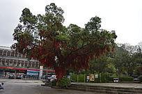 公园里的许愿树