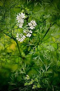 绿色植物小白花
