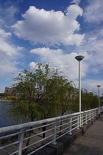 白云下绿树