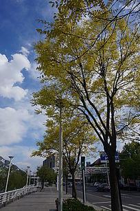 马路边的大树