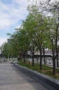 走廊旁绿树