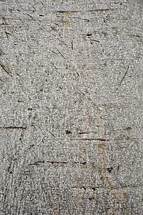 树皮纹理背景