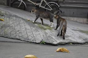 两只小猫咪