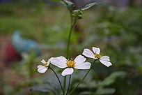 白色花朵摄影