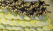蝴蝶翅羽拼黄色花图案