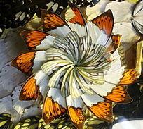 蝴蝶翅羽拼花图案
