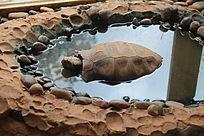 昆明动物园里的乌龟