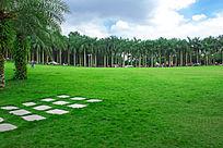 棕榈树林草地