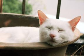 睡着的猫咪