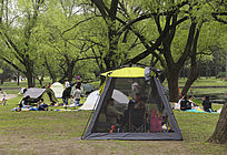 柳树帐篷都市休闲