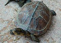 仰望的乌龟