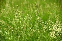 春天的野草