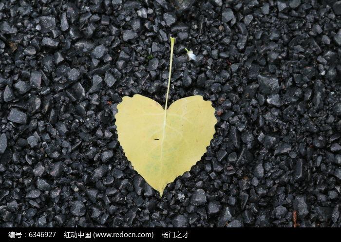 白杨树叶子的特点图片