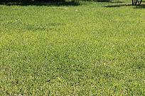 绿色草地背景