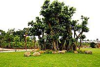 园林绿化风景