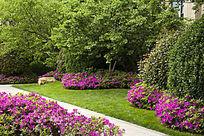 花园的美景