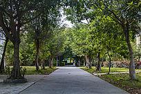 校园中的林荫小路