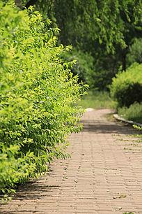 园区绿树丛