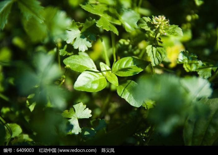 阳光绿色图片