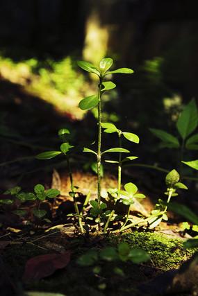 阳光下的绿色植物