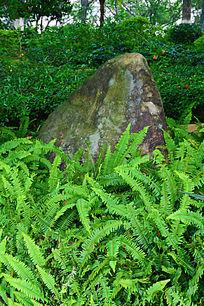 草丛里的石头