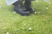草坪上的花