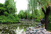 园林湖水图片