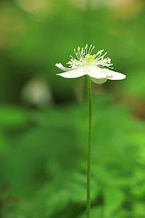 一朵白色野花