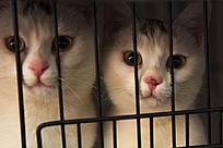 两只可爱的猫咪