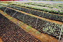 农业花卉栽培