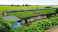 养殖场建筑