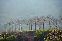 春天万仙山罗姐寨的一排小树逆光拍摄