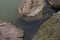 小溪边的石块