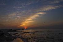 迎接日出的海鸥