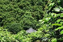 大森林摄影