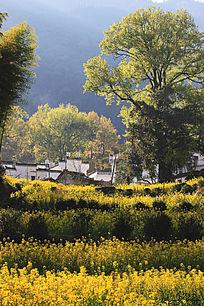 花丛中的村庄