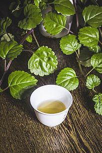 绿植和盛满普洱茶的白色茶杯