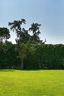 北京先农坛绿草地和绿墙