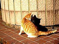 晒太阳的猫