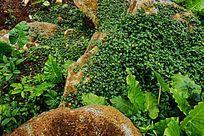园林石绿叶